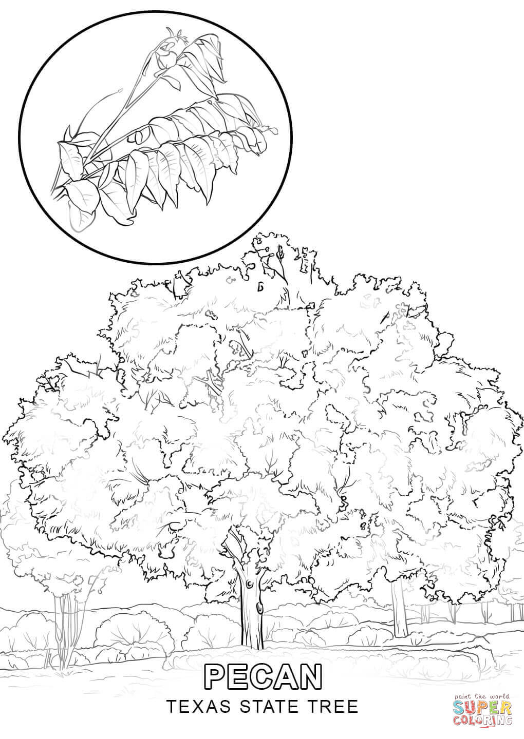 state tree coloring pages oregon state tree coloring page free printable coloring state coloring pages tree