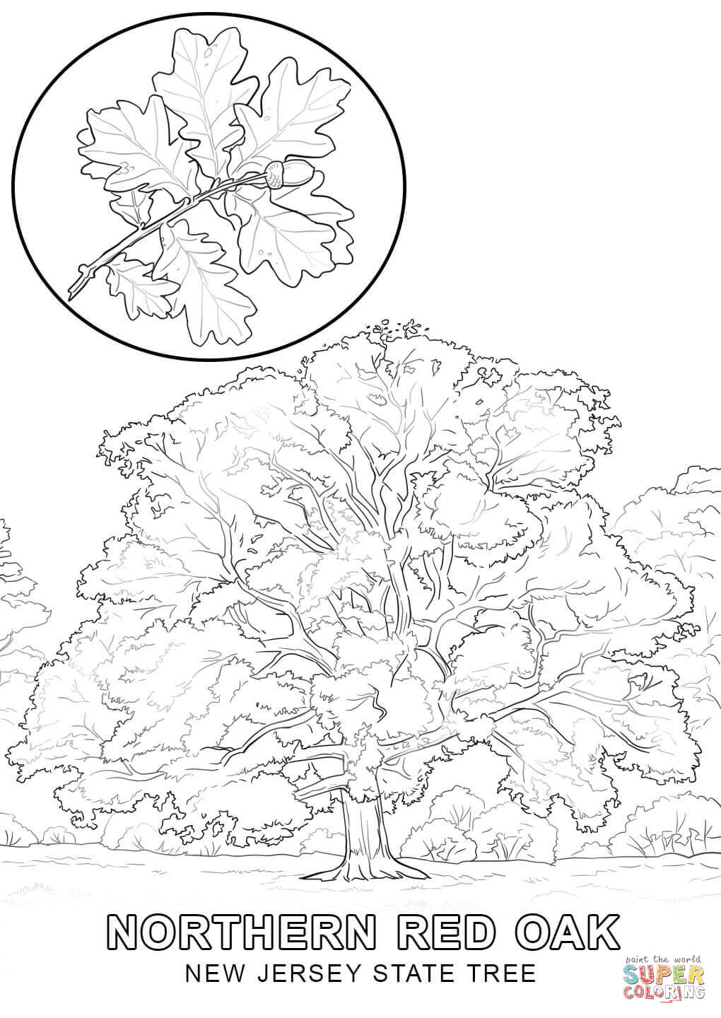 state tree coloring pages pennsylvania state tree coloring page free printable state tree coloring pages