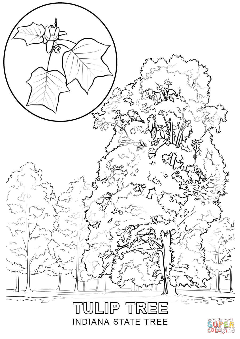 state tree coloring pages south dakota state tree coloring page free printable state tree pages coloring