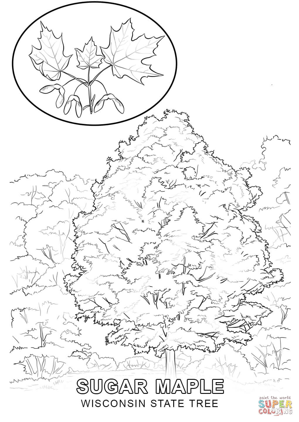 state tree coloring pages virginia state tree coloring page free printable coloring state tree pages