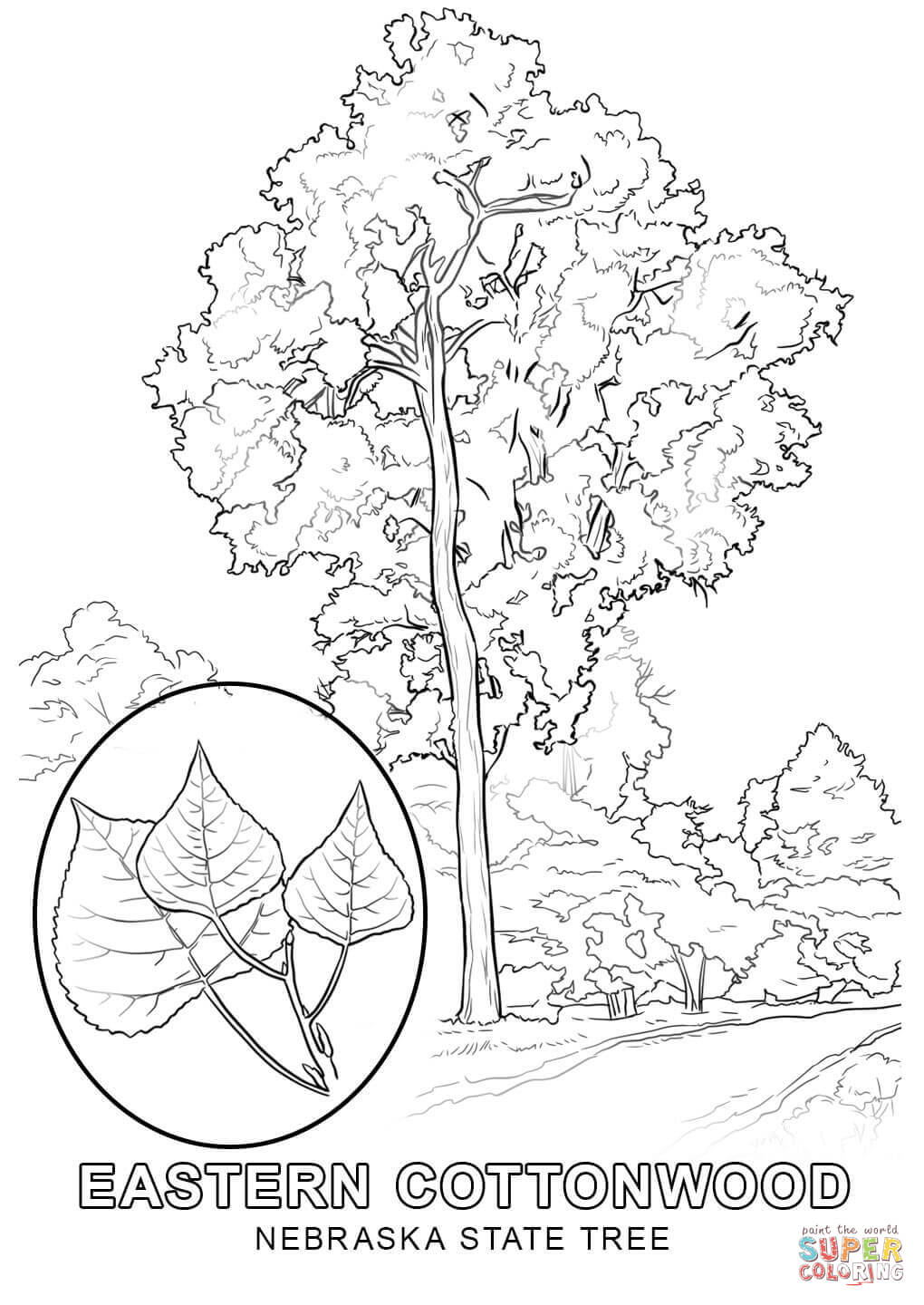 state tree coloring pages wisconsin state tree coloring page free printable coloring pages state tree