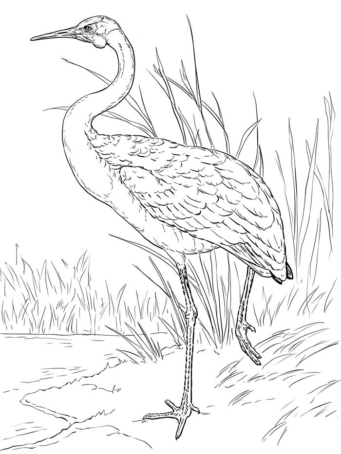 template for coloring australian animal template animal templates free template for coloring