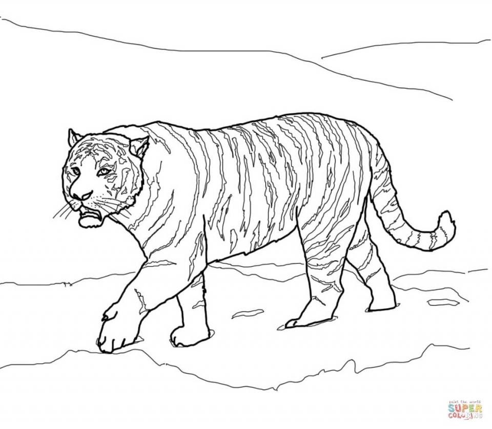 tiger coloring book pages get this tiger coloring pages realistic animal printables tiger pages coloring book