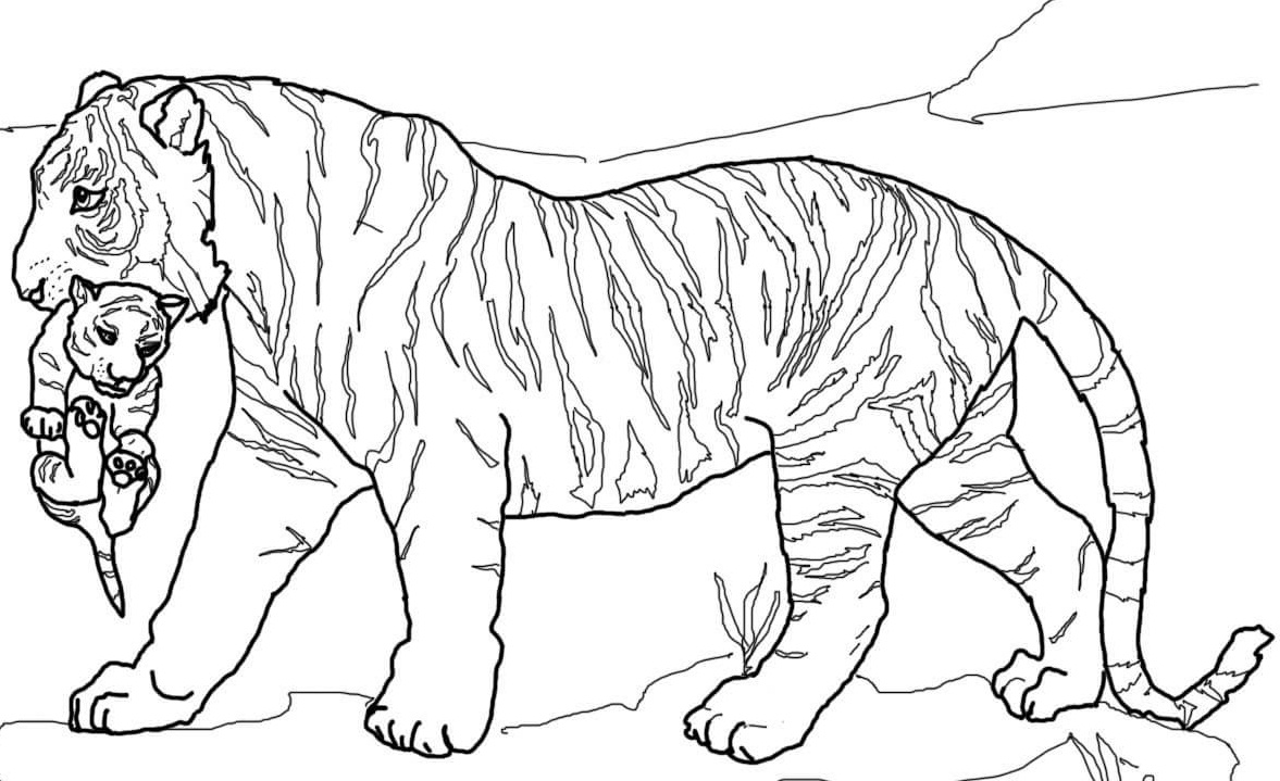 tiger coloring book pages tiger coloring pages for preschool at getdrawings free pages book coloring tiger