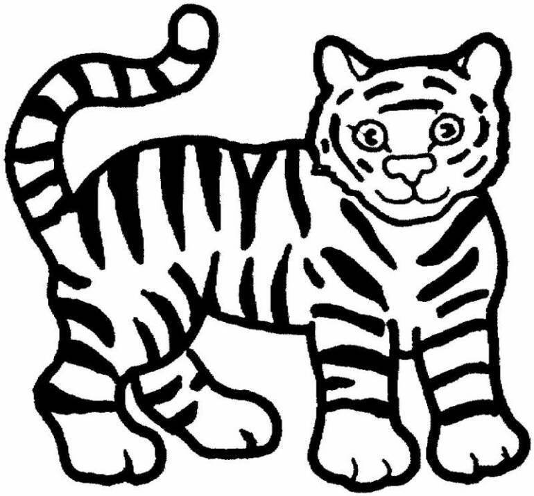tiger colouring pictures free printable animal tiger coloring pages colouring tiger pictures