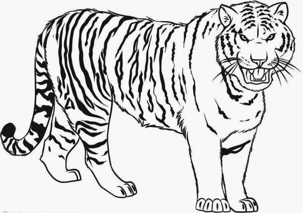 tiger colouring pictures free printable tiger coloring pages for kids tiger colouring pictures