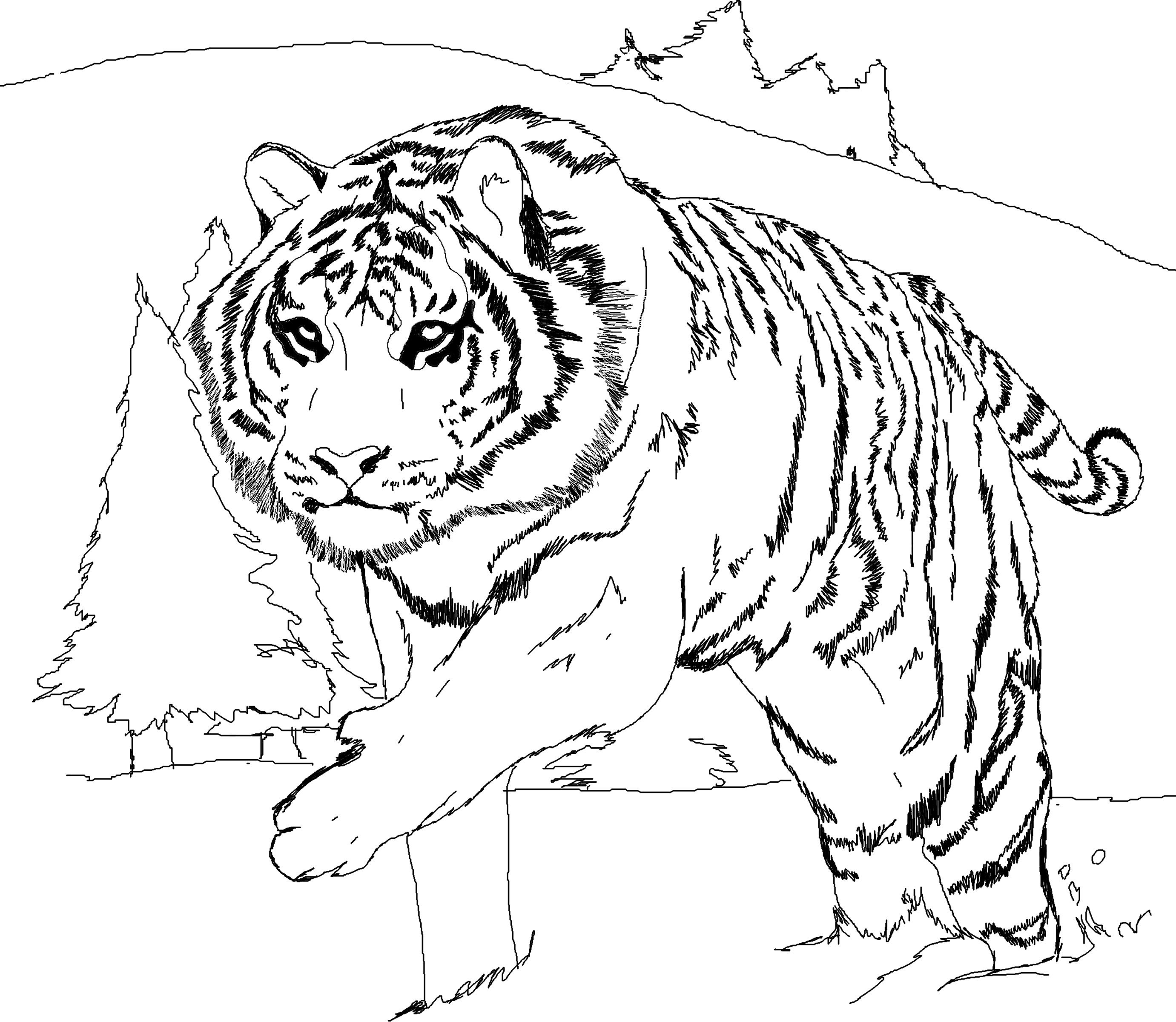 tiger colouring pictures free printable tiger coloring pages for kids tiger colouring pictures 1 1