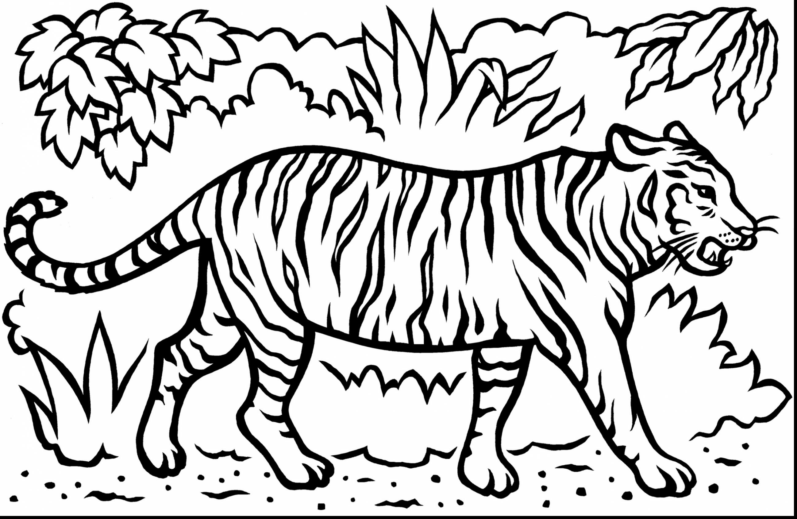 tiger colouring pictures tiger print drawing at getdrawings free download tiger pictures colouring