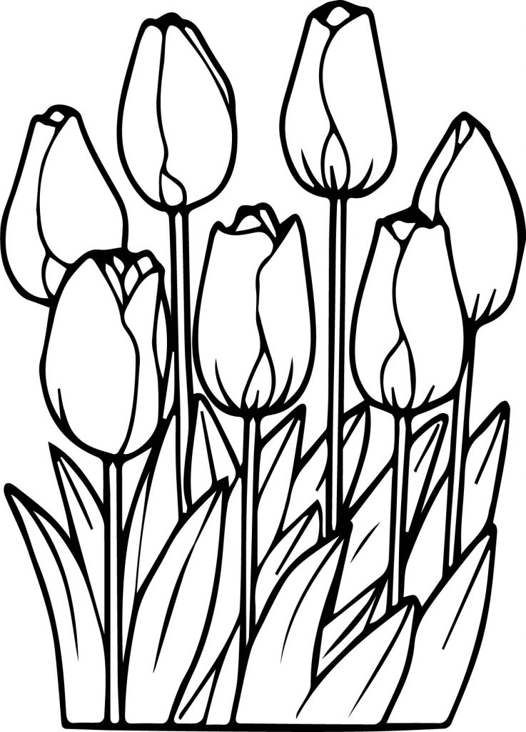 tulip coloring pictures flower coloring pages coloringrocks pictures tulip coloring