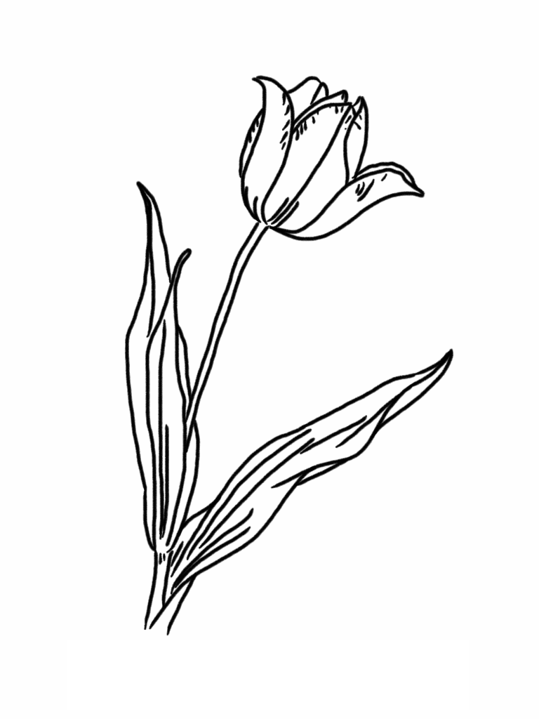 tulip coloring pictures free printable tulip coloring pages for kids tulip coloring pictures