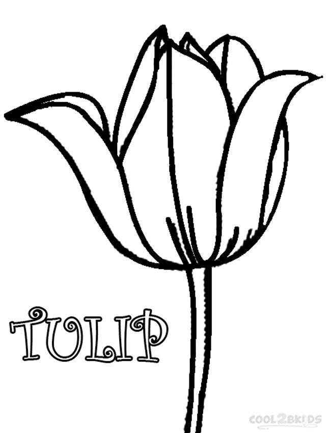 tulip coloring pictures large printable tulips clipart best tulip coloring pictures