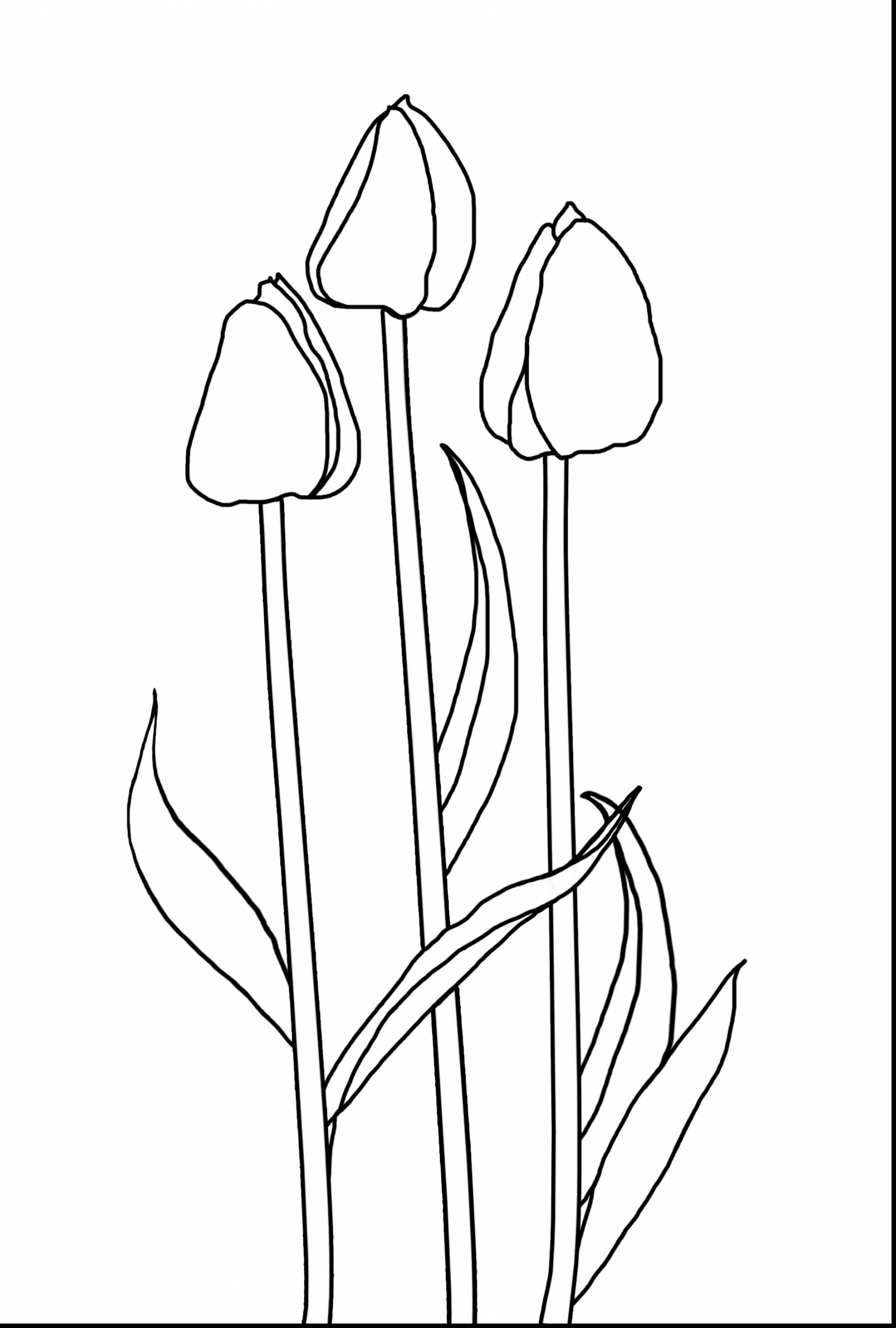 tulip coloring pictures tulip flower coloring pages at getdrawings free download pictures coloring tulip