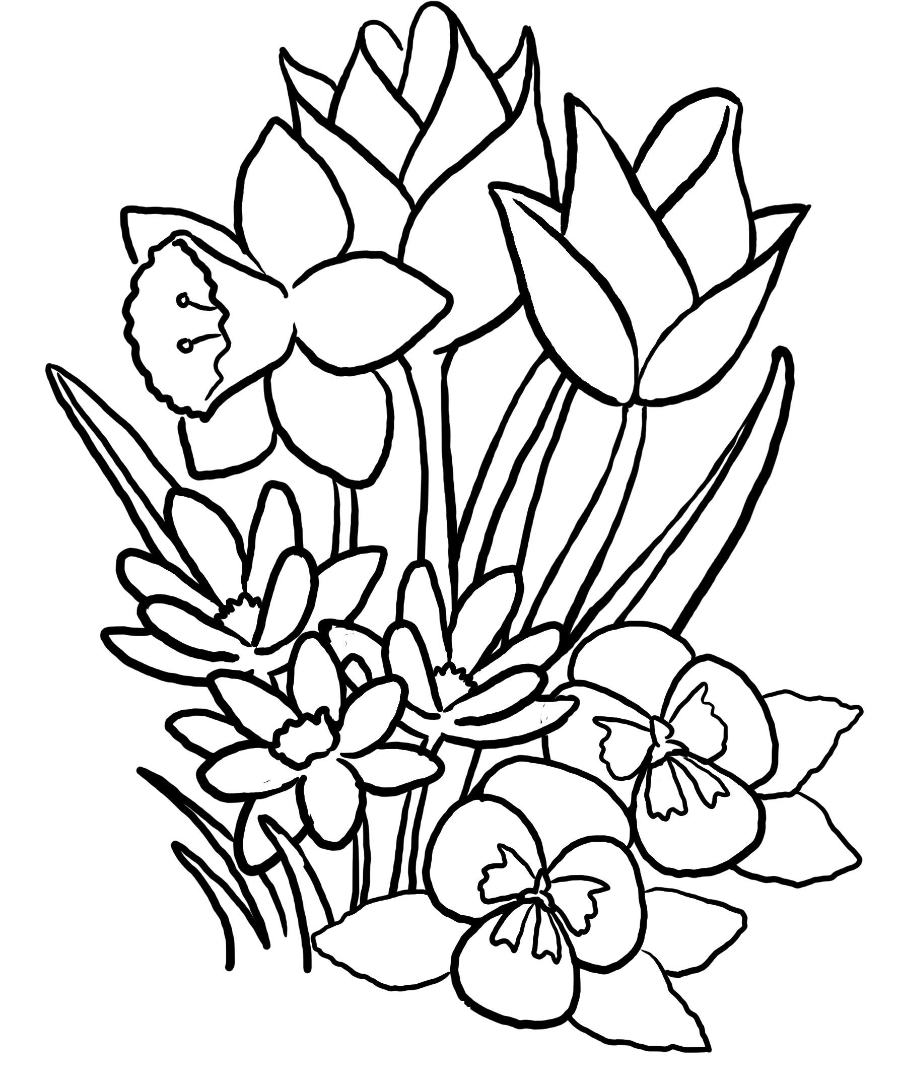tulip coloring pictures tulip flower coloring pages at getdrawings free download pictures coloring tulip 1 1