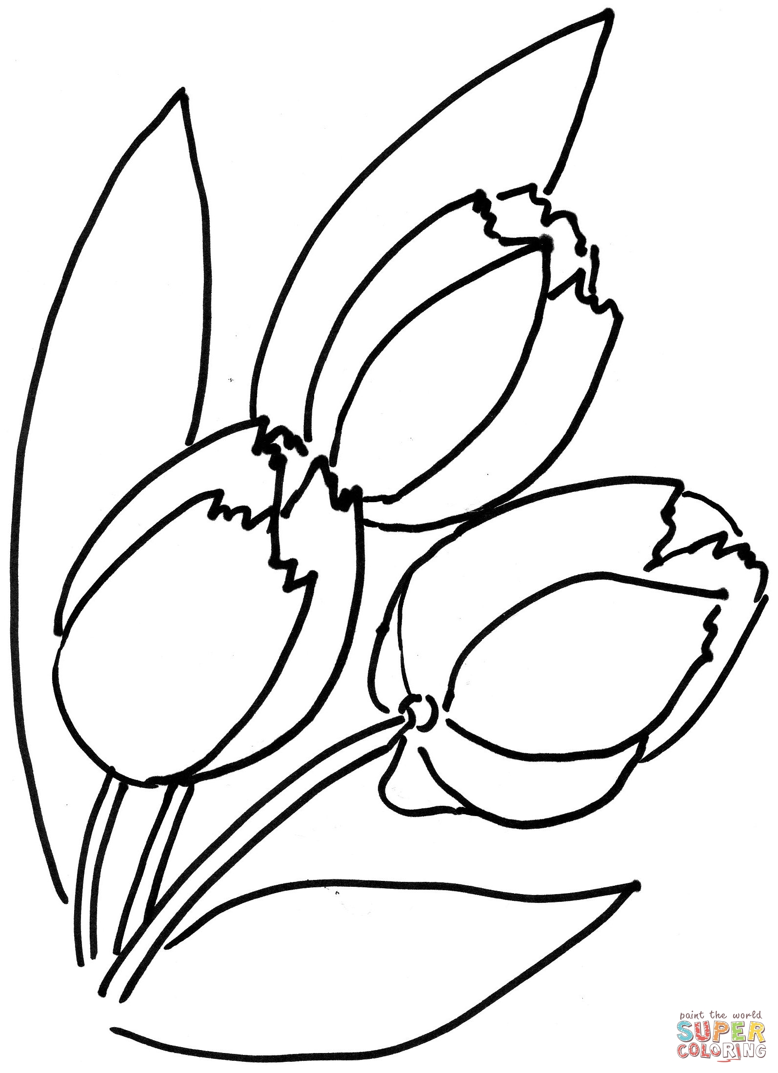 tulip coloring pictures tulips to color clipart best pictures coloring tulip