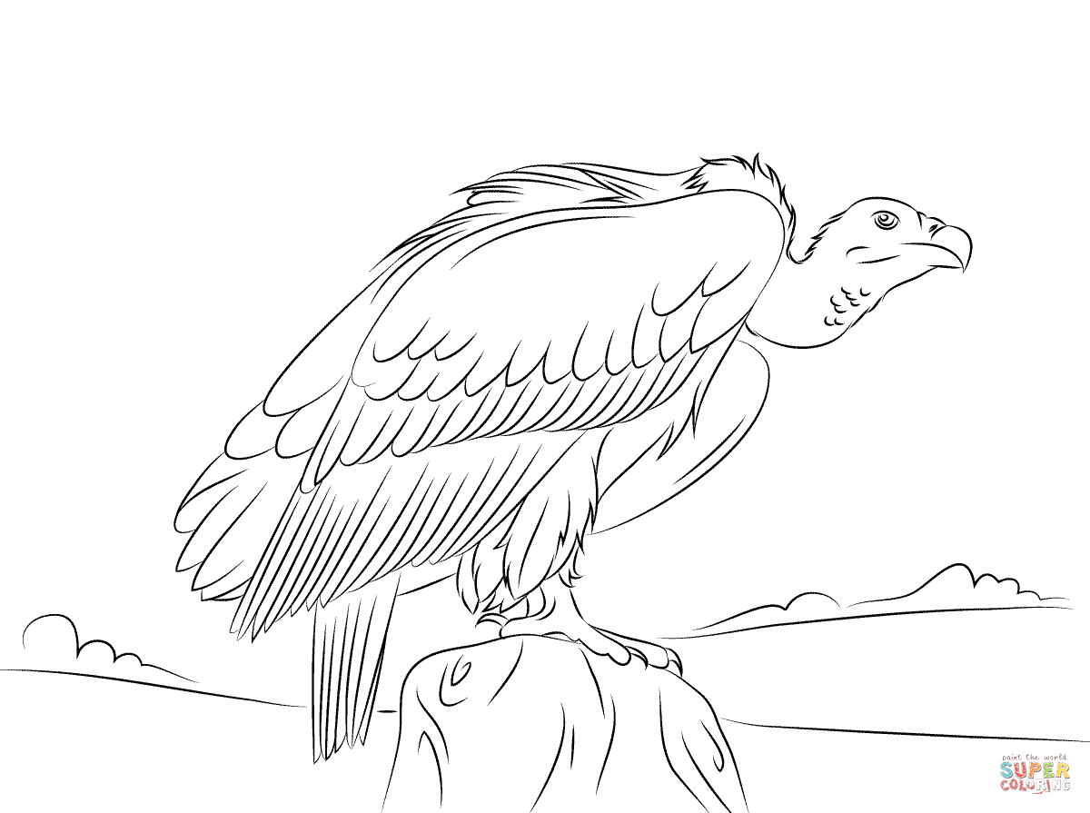 vulture coloring page happy vulture coloring pages download free happy vulture vulture coloring page