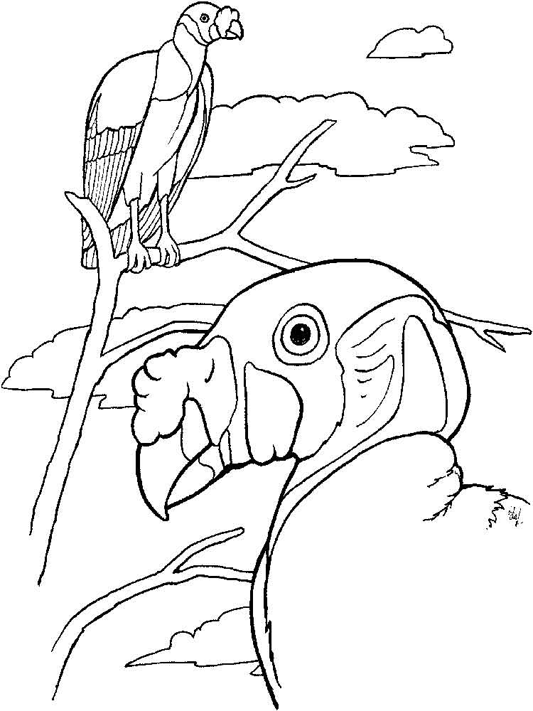 vulture coloring page long billed indian vulture coloring page free printable vulture coloring page