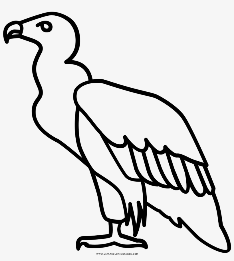 vulture coloring page turkey vulture coloring download turkey vulture coloring coloring vulture page