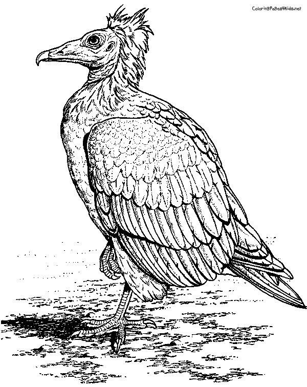 vulture coloring page turkey vulture coloring download turkey vulture coloring coloring vulture page 1 1