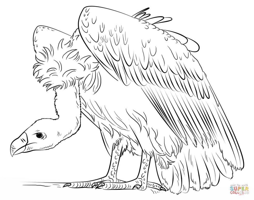 vulture coloring page vulture coloring pages preschool and kindergarten vulture coloring page