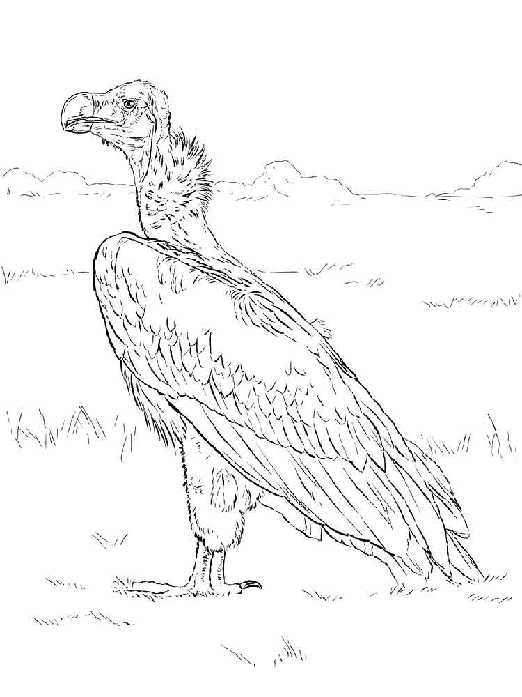 vulture coloring page vulture pyrography patterns coloring pages for kids page coloring vulture