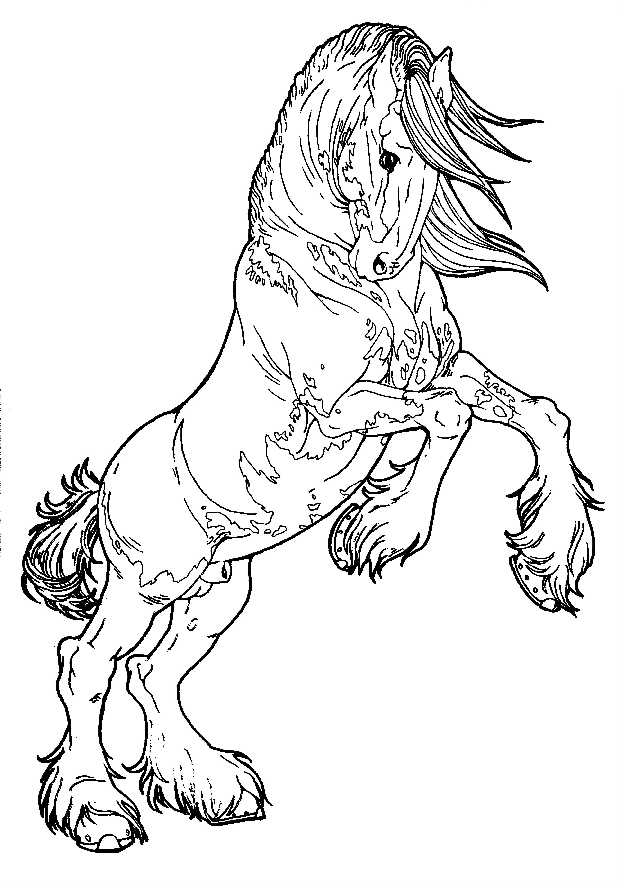 wild horse coloring pages dover coloring pages horses inkleurprente pinterest wild pages horse coloring