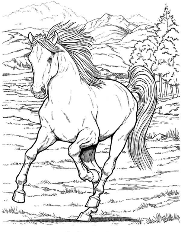 wild horse coloring pages mustang wild horse coloring page free printable coloring coloring horse pages wild