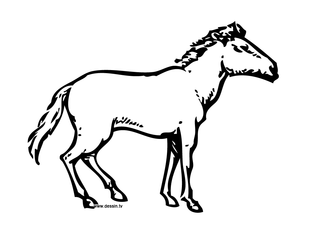 wild horse coloring pages patterned clydesdale by applehunterdeviantartcom on horse coloring pages wild