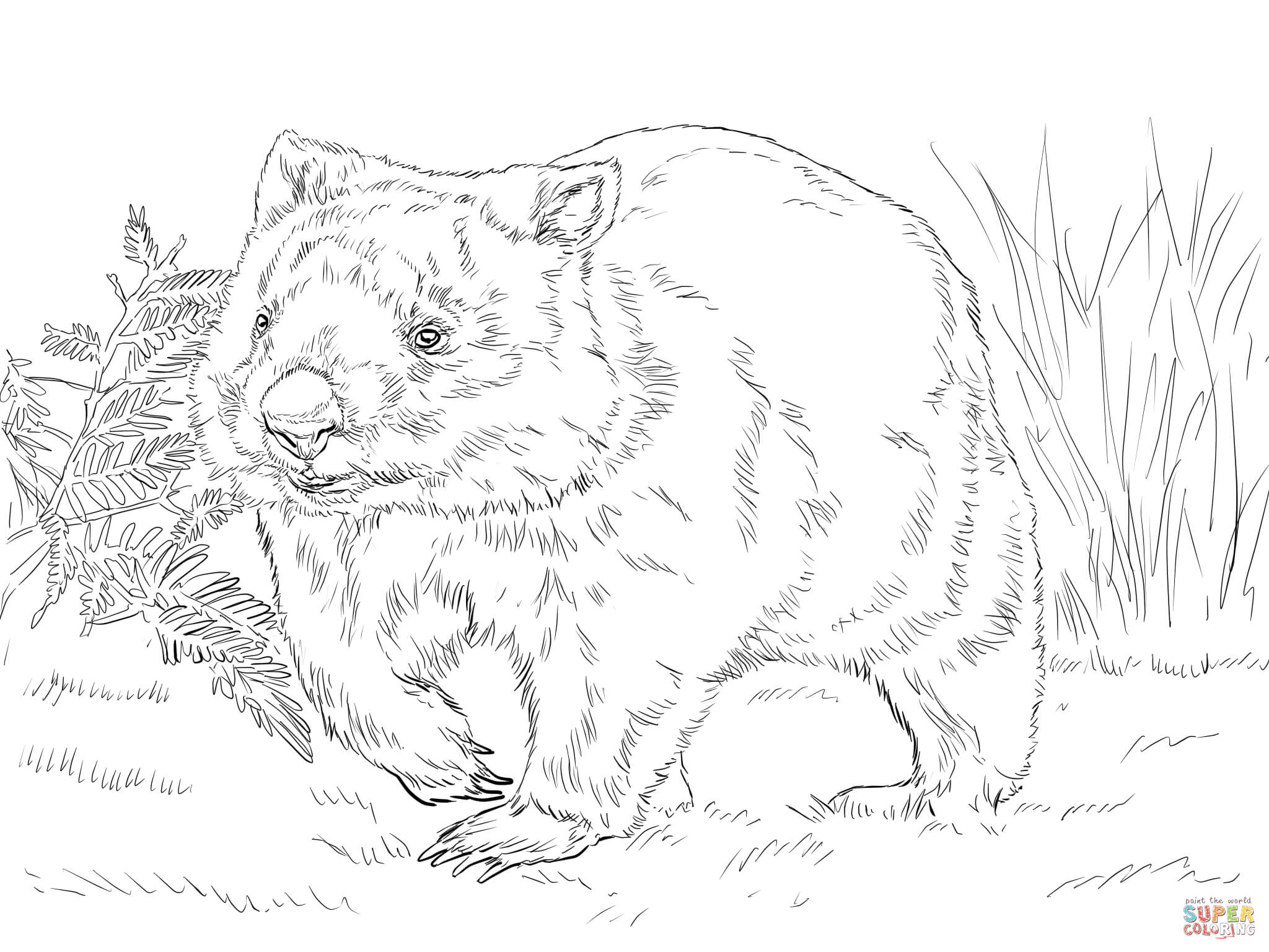 wombat colouring baby wombat coloring page free printable coloring pages wombat colouring