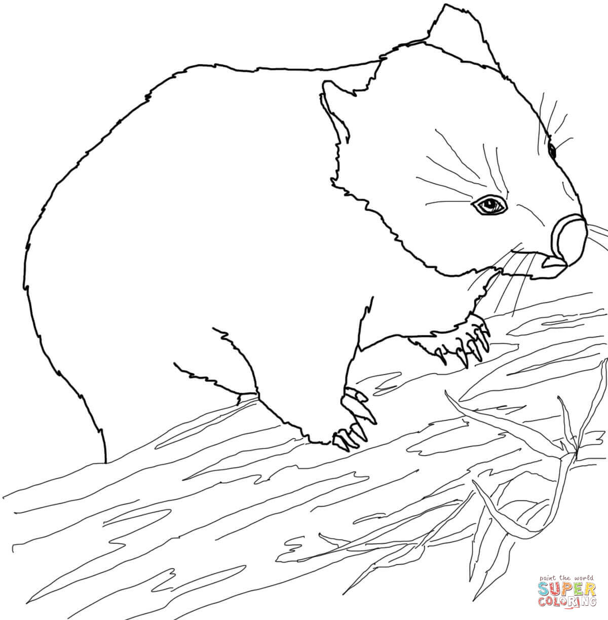 wombat colouring funny wombat coloring page free printable coloring pages colouring wombat