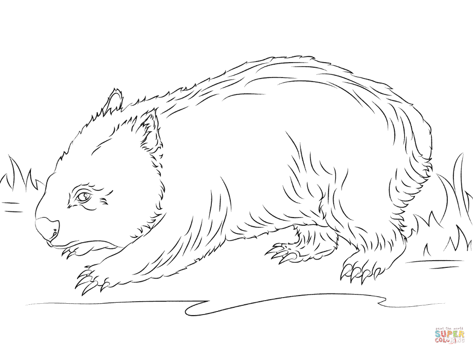 wombat colouring hairy nose wombat coloring page free printable coloring wombat colouring