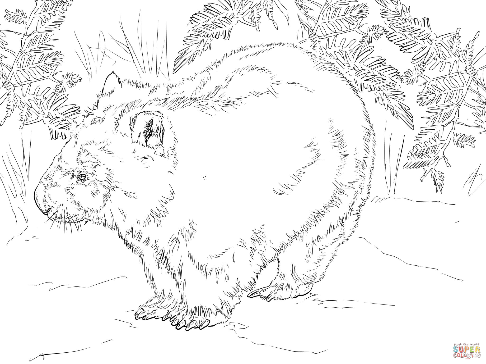 wombat colouring wombat australia day coloring pages print coloring 2019 wombat colouring