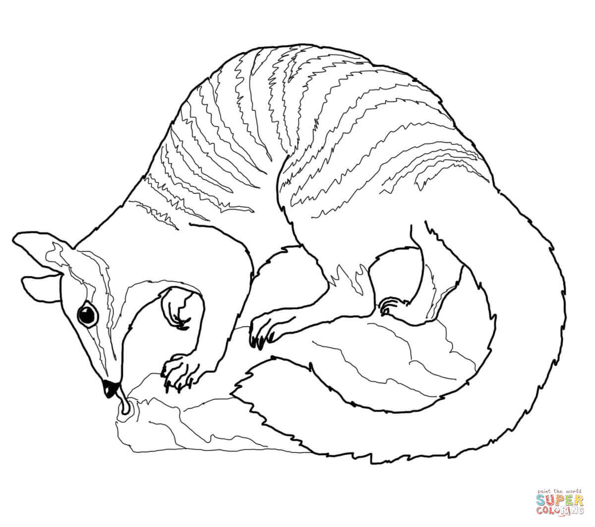 wombat colouring wombat bear coloring page free printable coloring pages colouring wombat