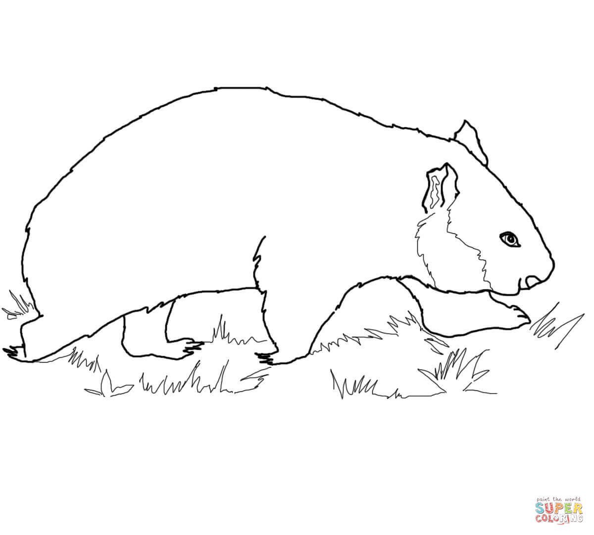 wombat colouring wombat coloring download wombat coloring for free 2019 colouring wombat