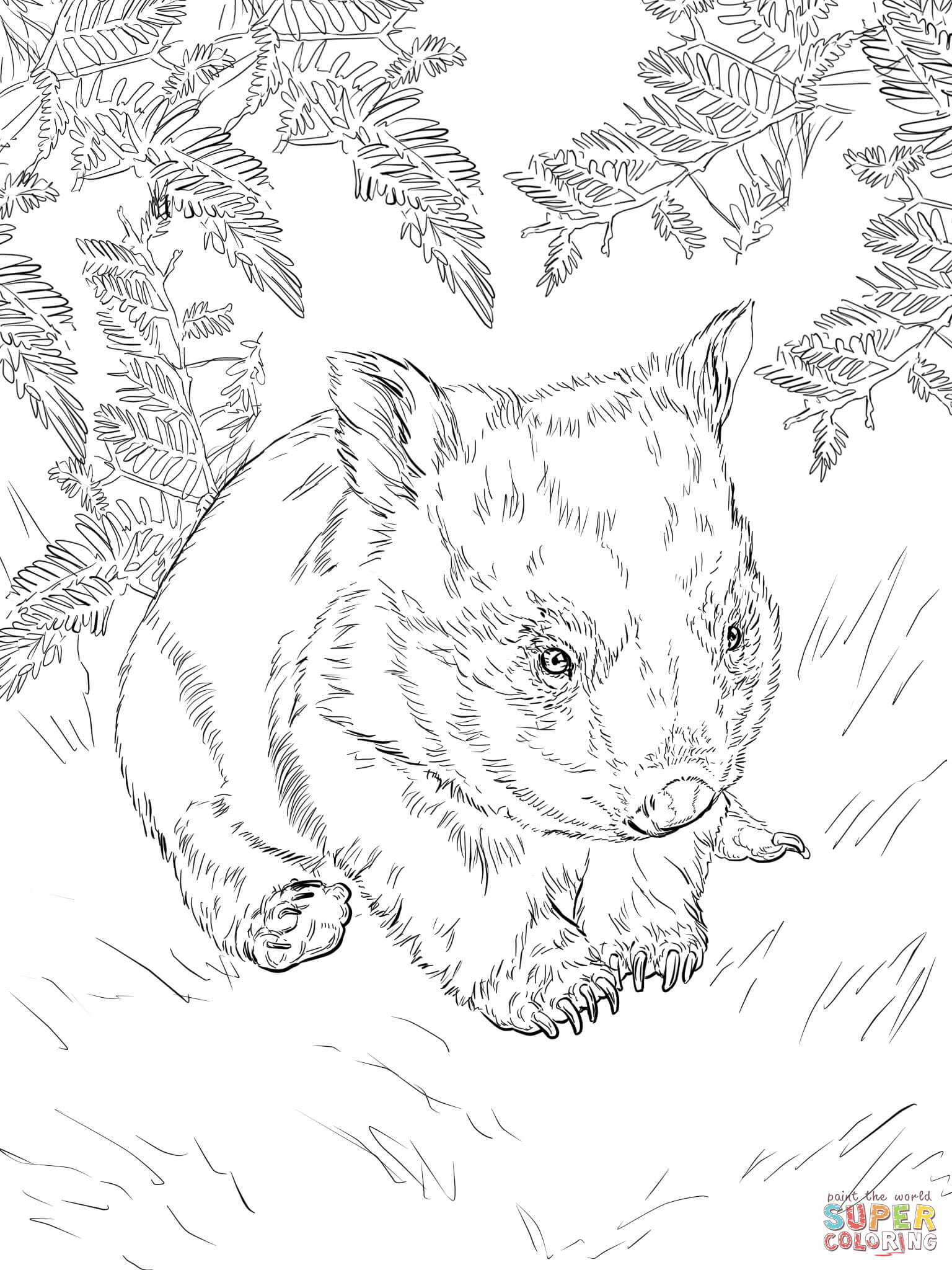 wombat colouring wombat coloring download wombat coloring for free 2019 wombat colouring