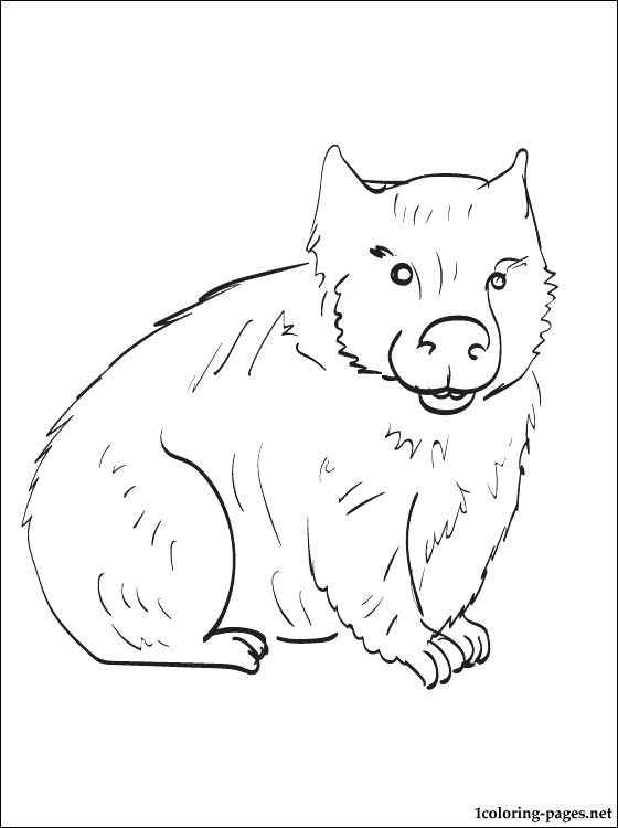 wombat colouring wombat coloring page animals town animals color sheet colouring wombat