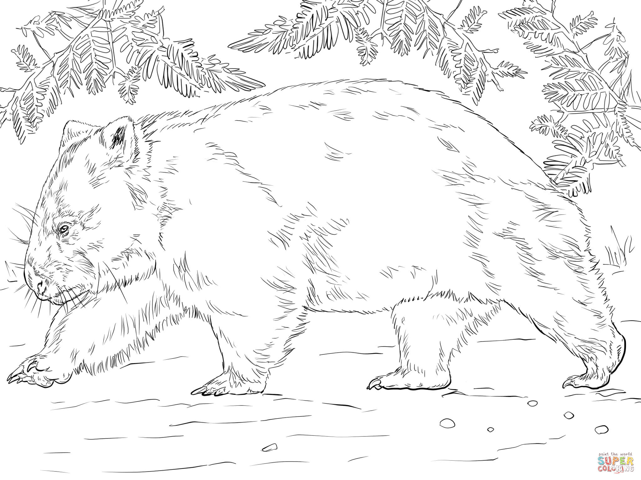 wombat colouring wombat from australia coloring page free printable colouring wombat